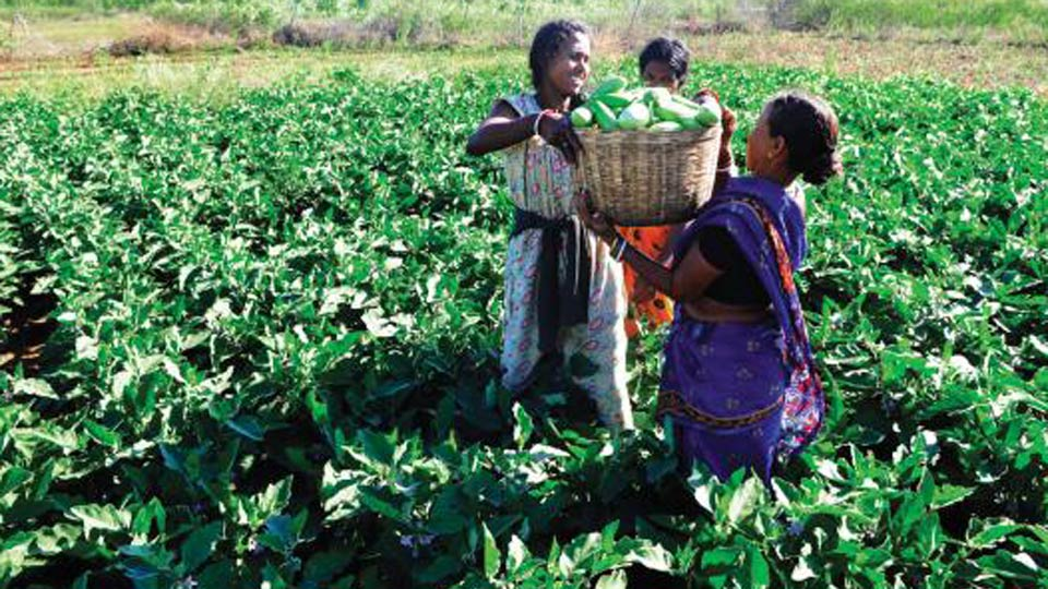 81 per cent of agricultural businesses results