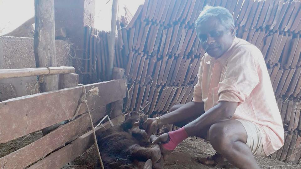 Pali Veterinary Doctor