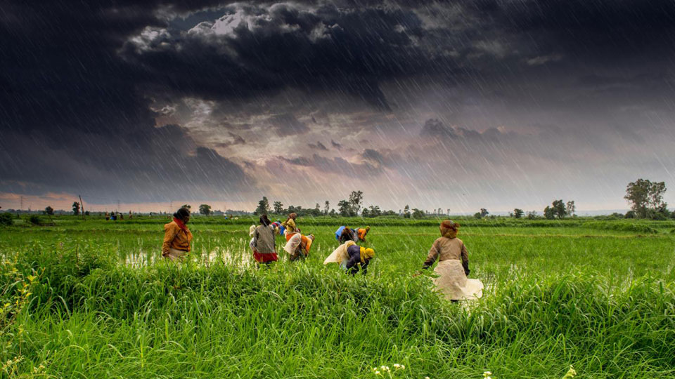 India's monsoon likely to escape El Nino unscathed