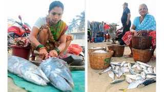 1) मालवण - येथे सुरमईसारखा किंमती मासाही चांगल्या दर्जाचा मिळू लागला आहे. 2) मालवण - येथे समुद्रात जास्त वजनाचा बांगडा व इतर मासे मिळू लागले आहेत.