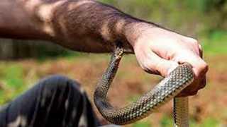 National News Snake Bite Uttar Pradesh Incident