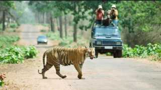 Tadoba-Tiger-Project