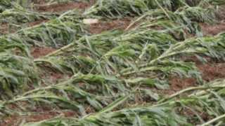 crop-damage