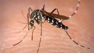 In the Nanded district hundreds of patients are infected with Dengue