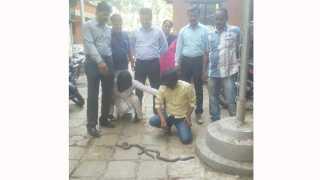 ulhasnagar mumbai snake smuggling arrested