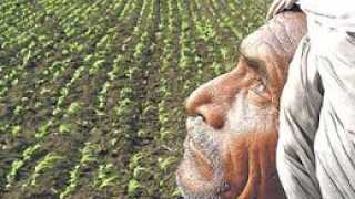 Farmers Facing Problem Because Of Government Policy And Insurance