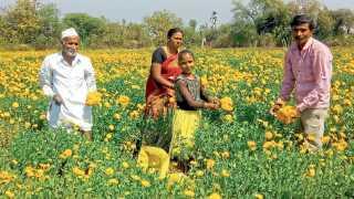 vibhute family