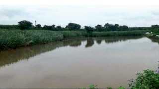 कळंब (ता. आंबेगाव) - घोड नदीला आलेले पुराचे पाणी शेतात घुसल्याने पाण्याखाली गेलेले नुकतेच लागवड केलेले ऊस पीक.