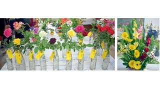 रत्नागिरी - रोझ सोसायटी आयोजित गुलाबपुष्प स्पर्धेतील किंग, क्विनसह अन्य रंगांमधील विजेते गुलाब. दुसऱ्या छायाचित्रात प्रथम विजेती पुष्परचना.