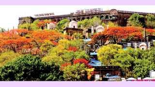 जेजुरी (ता. पुरंदर) - गुलमोहराची झाडे लाल-पिवळ्या रंगाच्या फुलांनी बहरल्याने खुलून दिसणारे खंडोबा गडाचे सौंदर्य.