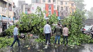 बाजीराव रस्ता - पावसात गुरुवारी दुपारी दक्षिणमुखी मारुती मंदिराजवळ पडलेले झाड.