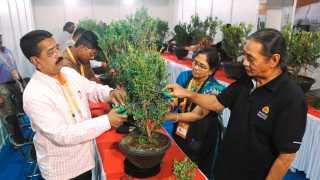 bonsai-agriculture