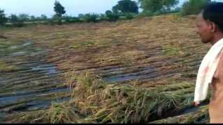 rain in bhandara
