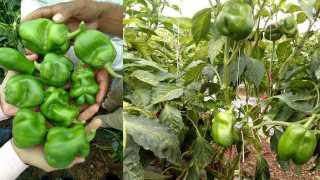 Cheating With Young Farmers of Kasmade Satana