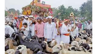 पिंपळी (ता. बारामती) - येथे संत सोपानकाका महाराज पालखी सोहळा आल्यानंतर मेंढ्यांनी प्रदक्षिणा घालून पालखीचे स्वागत केले.