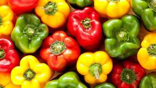 Earning millions from red yellow capsicum polyhouse