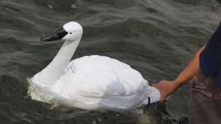 robotic-swan