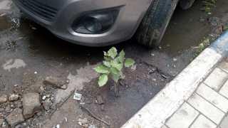 tree-plantaion.jpg