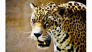 leopard attacks in nehunebare taluka chalisgaon