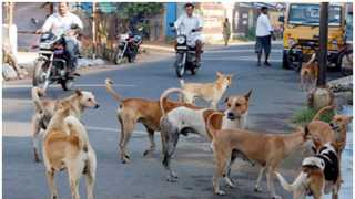 The first Dog Park established in Hyderabad
