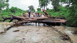 बाजारगाव - देवळी गावाकडे पुलावर मध्यरात्री झालेल्या पावसामुळे भले मोठे झाड वाहून आले. गावकरी व शाळेतील मुलांना प्रवास करताना गैरसोय झाली.