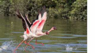 marathi news 31 State Level Bird Meetings in Thane
