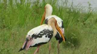 varieties of birds in murgud