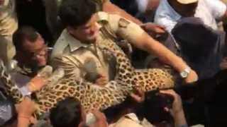 leopard ulhasnagar