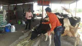 animal-vaccination