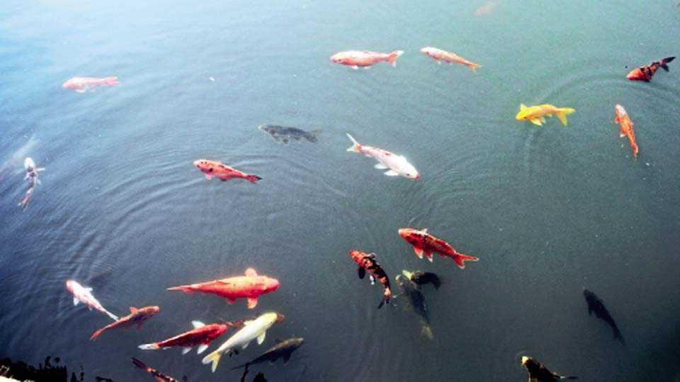 उद्यानातील रंगीबेरंगी माशांचे जग