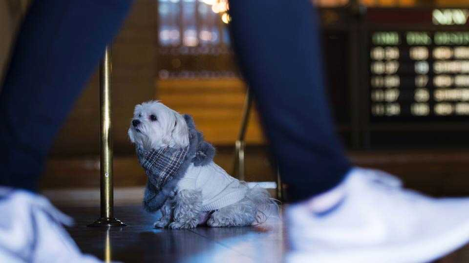 fashion accessories for dogs