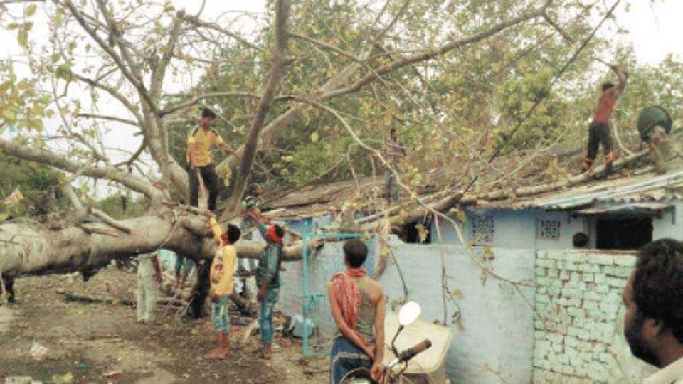 खापरखेडा : दुपारपर्यंत उन्ह तापल्यानंतर बुधवारी सायंकाळच्या सुमारास परिसरात सोसाट्याच्या वाऱ्यासह पावसाला सुरुवात झाली. वेकोली वसाहत सिल्लेवाडा परिसरात झालेल्या वादळी पावसाने मोठे वडाचे झाड वसाहतीवर पडले.
