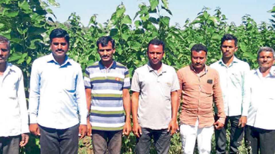 पांगरा शिंदे येथील रेशीम शेती करणाऱ्या शेतकऱ्यांसमवेत सरपंच भागवत शिंदे, ग्रामसेवक आदिनाथ पांचाळ.