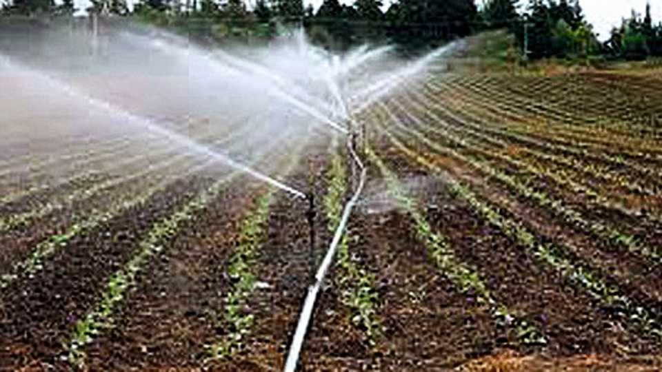 Dhadak Irrigation scheme in Akola is not properly organized