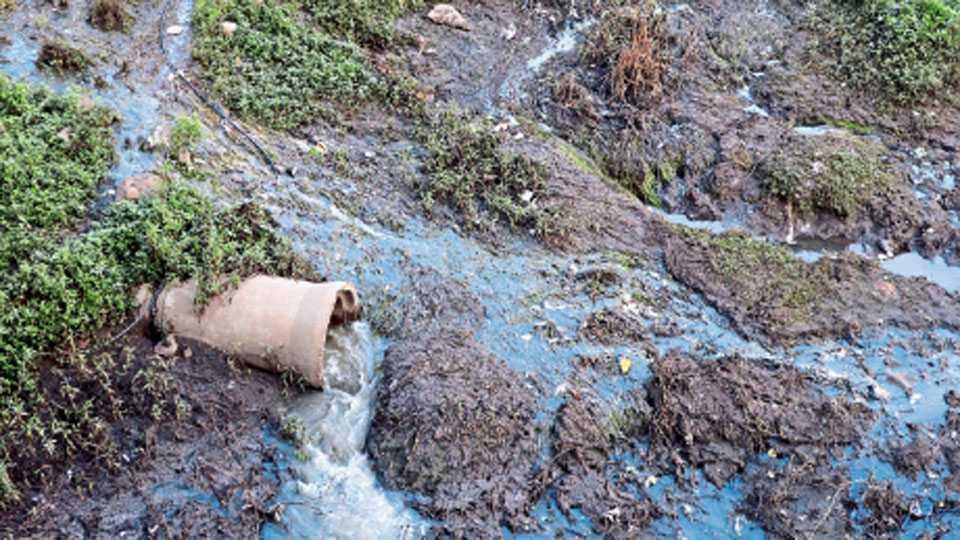 पिंपळेनिलख - ड्रेनेज तोडुन मुळा नदी पात्रात घाण पाणी सोडले जात असताना टिपलेले छायाचित्र