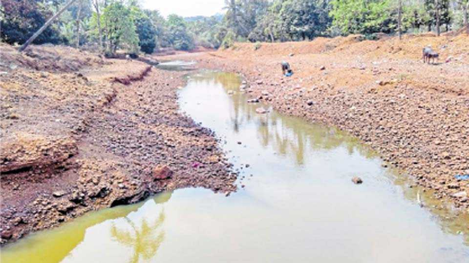 पावस - गौतमी नदी पावसाळ्यानंतर गाळात जात आहे.