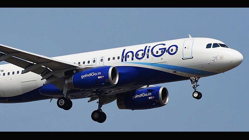 Bengaluru Doctor Complained About Mosquitoes Removed From IndiGo Flight