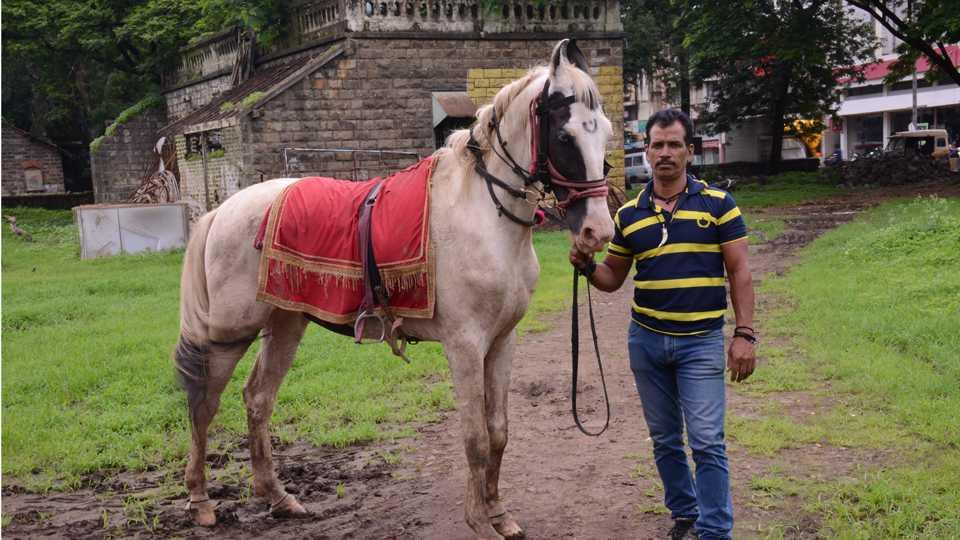 Badal Horse