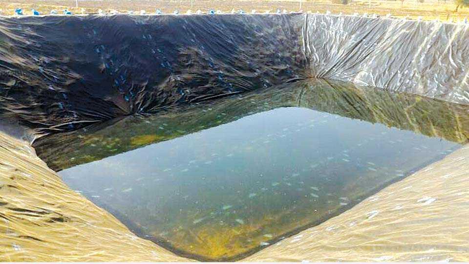 पहूर (ता. जामनेर) - त्र्यंबक भडांगे यांनी तयार केलेले शेततळे.