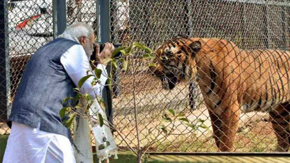 Modi_Tiger