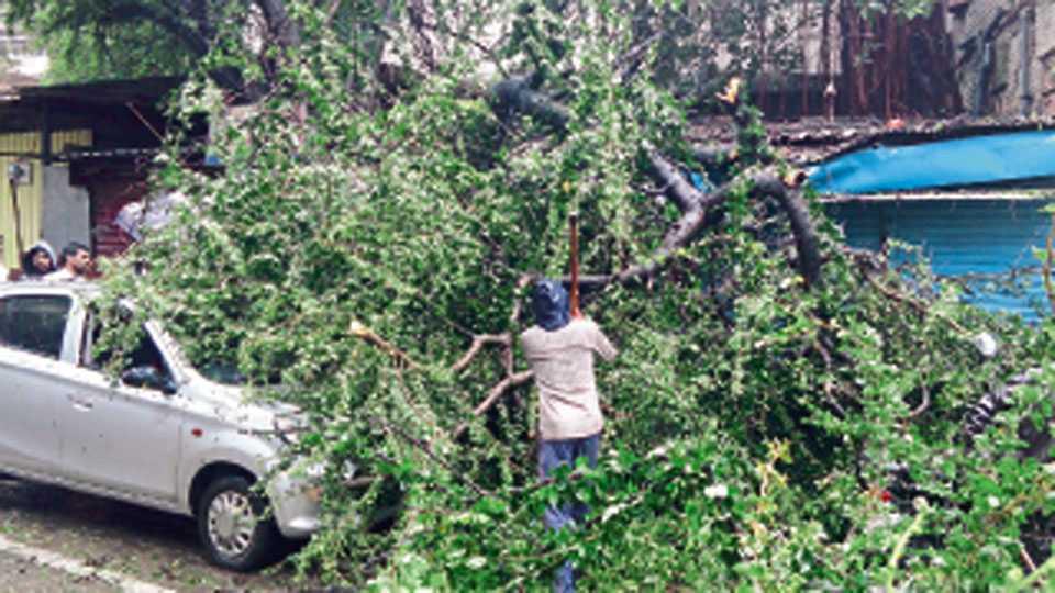 पंचवटी - संततधारेमुळे रविवारी कोसळलेले झाड व त्याखाली अडकलेली वाहने.