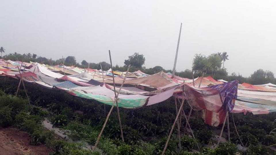 Farmers facing issue due to increasing temperature