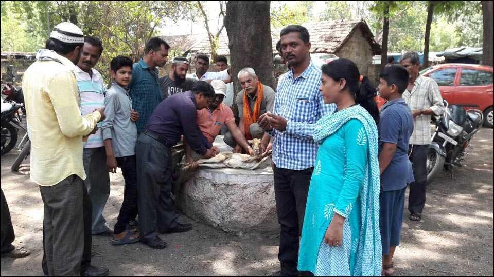 अमळनेर: जखमी पाडसावर उपचार करताना पशुवैद्यकीय अधिकारी डॉ. व्ही. बी. भोई. शेजारी वनरक्षक डी. के. जाधव, अजय पाटील व नागरिक.