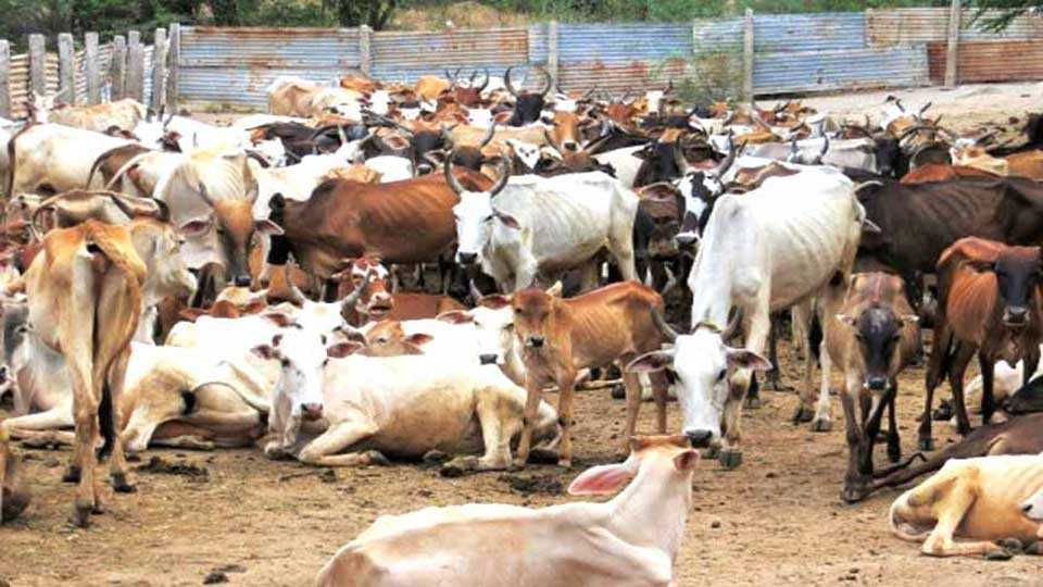 Release of animals taken for slaughter
