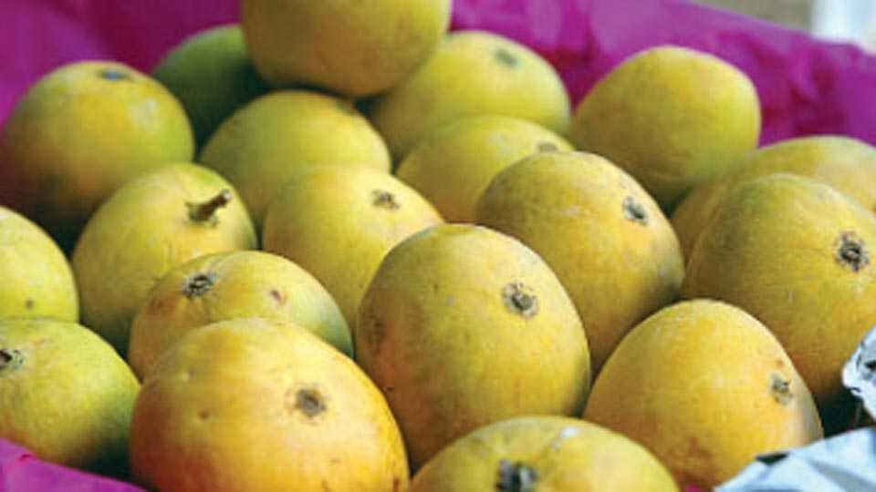 devgad-mango