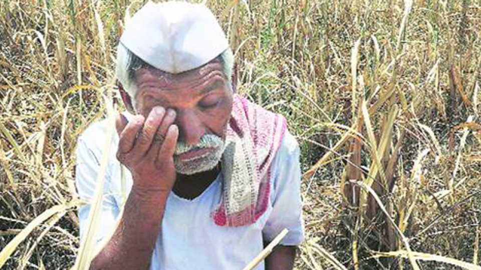 government declared farmer loan waiver