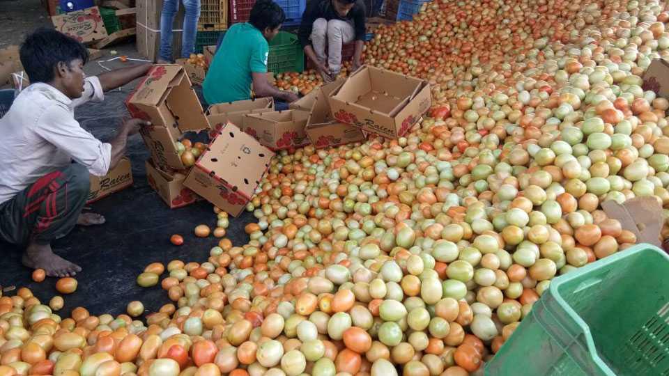 Export of tomatoes from Narayangawa to Dubai
