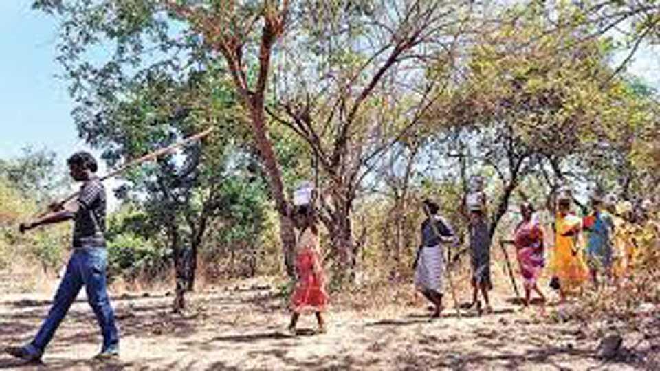 Mumbai News Palghar News Tribal Migration