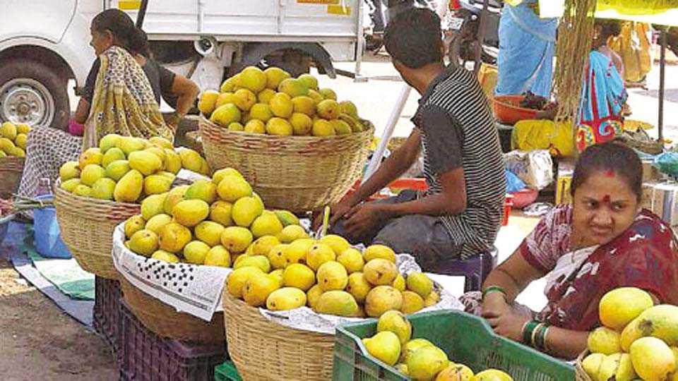 सावंतवाडी - येथील ग्राहकांची आठवडा बाजारादिवशीही आंबा खरेदीसाठी गर्दी दिसत नव्हती.