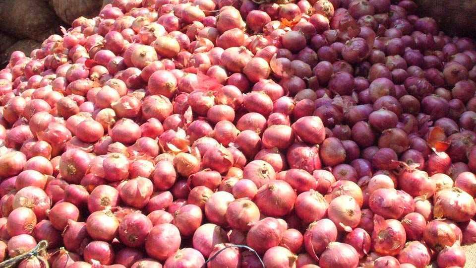 marathi news nasik onion production